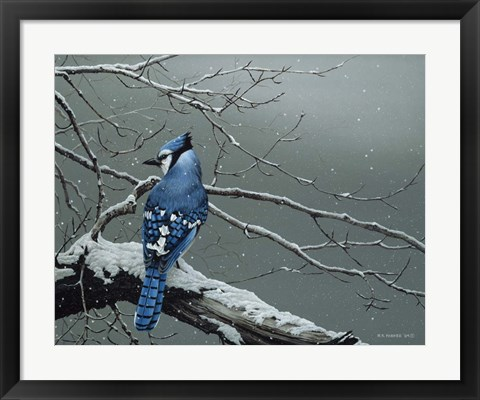 Framed Winter Jay Print