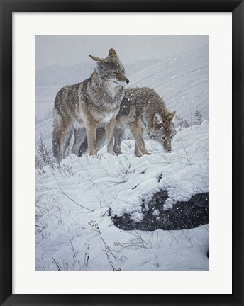 Framed Winter Storm- Coyotes Print