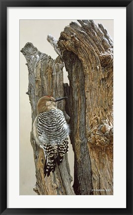Framed Gila Woodpecker Print