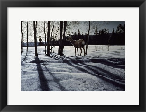 Framed Afternoon Shadows- Mule Deer Print