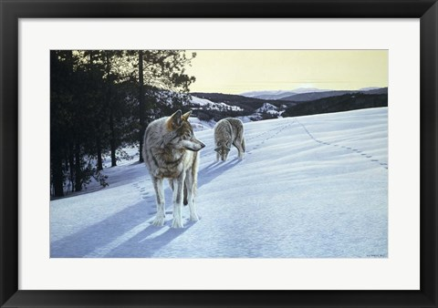 Framed At End Of Day- Wolves Print