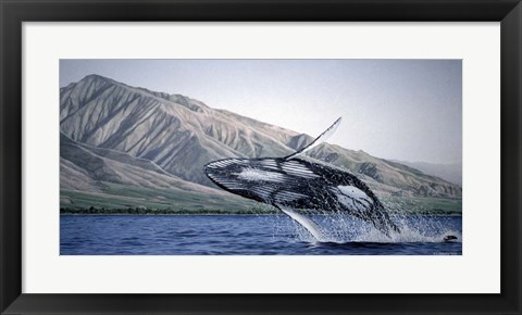 Framed Breeching Humpbacks - Maui Print