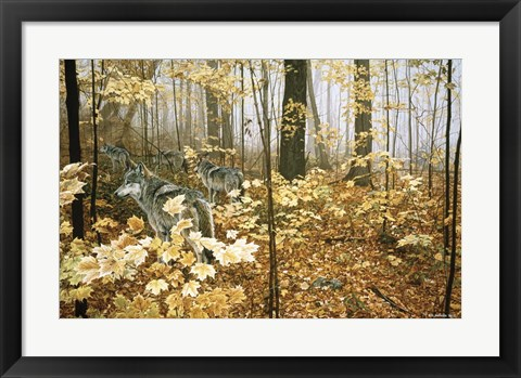 Framed Autumn Maples - Wolves Print