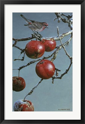 Framed Winter Apples - Purple Finch Print