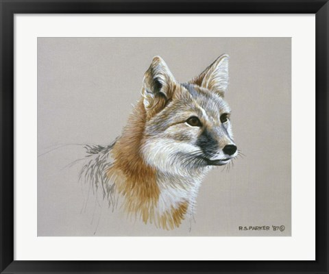 Framed Swift Fox Print