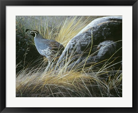 Framed California Quail Print
