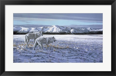 Framed First Snow - Arctic Wolves Print