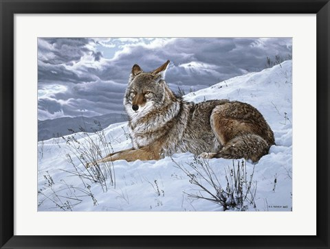 Framed Darkening Sky- Coyote Print