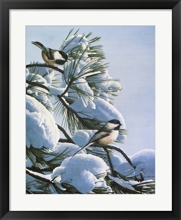 Framed Snow On The Pine - Chickadees Print