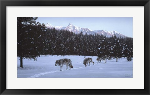 Framed Evening Glow- Wolf Pack Print