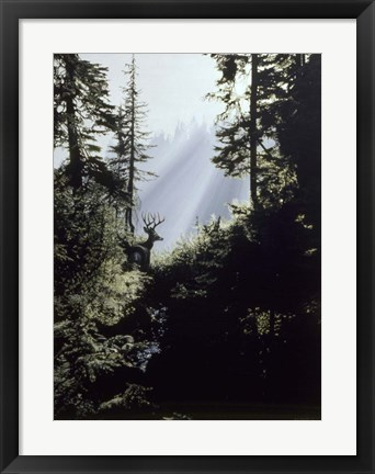 Framed Edge Of The Forest Print
