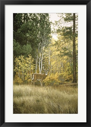 Framed Autumn Aspen - White Tailed Deer Print