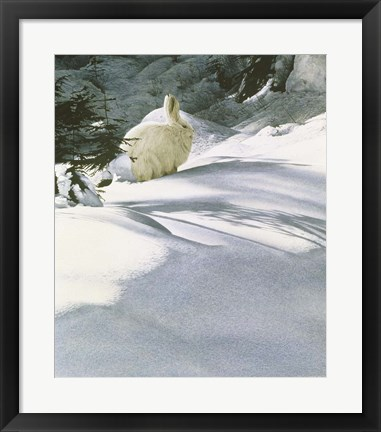 Framed Snow Shoe Hare Print