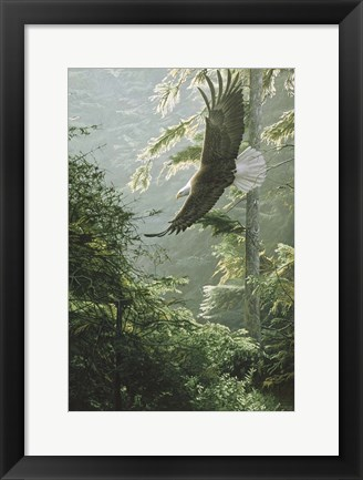 Framed Morning Flight - Eagle Print