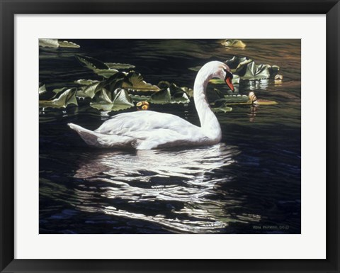 Framed Mute Swan And Lily Pads Print