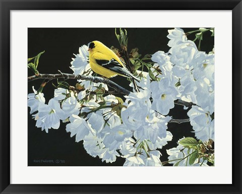 Framed Goldfinch And Blossoms Print