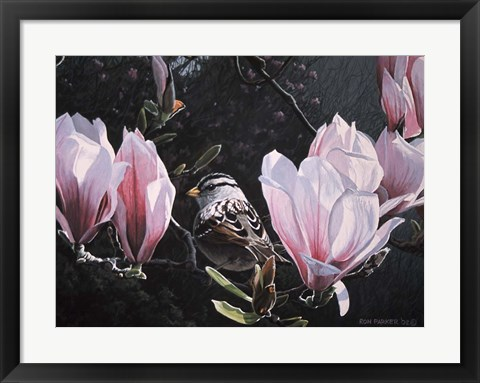 Framed Sparrow In Magnolia Print