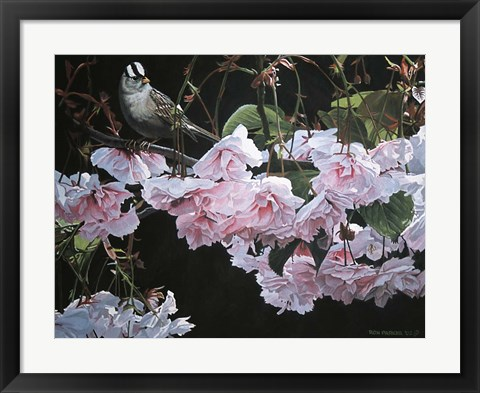 Framed Apple Blossoms Print