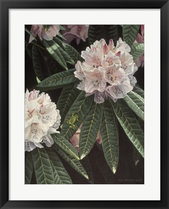 Framed Rhododendron Print