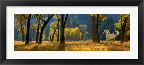 Framed Running Free Print