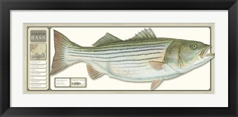 Framed World Record Striped Bass Print