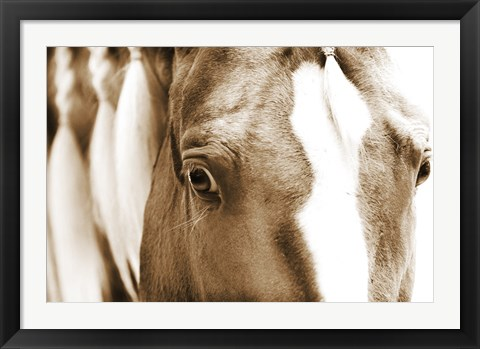 Framed Braided Mane Sepia Print