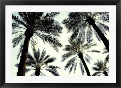 Framed Palm One Print