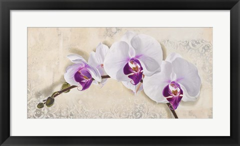 Framed Royal Orchid Print