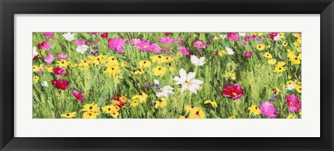 Framed Field of Flowers (Detail) Print