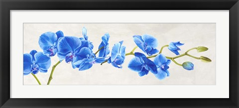 Framed Blue Orchid Print