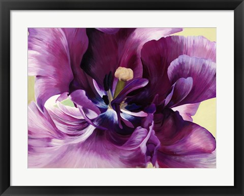 Framed Purple Tulip Close-up Print
