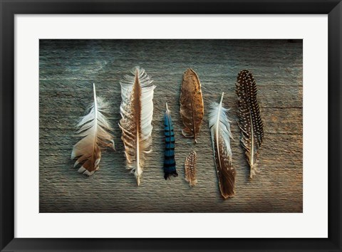 Framed Feather Collection I Print