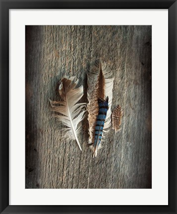 Framed Feather Collection III Print
