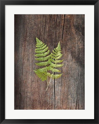 Framed Woodland Fern II Print