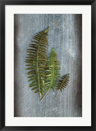 Framed Woodland Fern VI Print