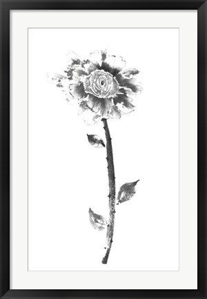 Framed Ink Rose Print