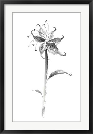 Framed Ink Tiger Lily Print