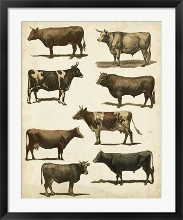 Framed Antique Cow Chart Print