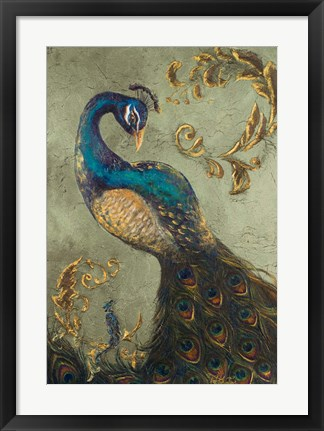 Framed Peacock on Sage II Print