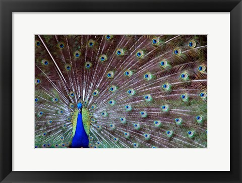 Framed Wild Beauty Print