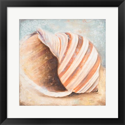 Framed Seashell Collection I Print