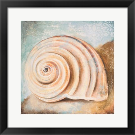 Framed Seashell Collection IV Print