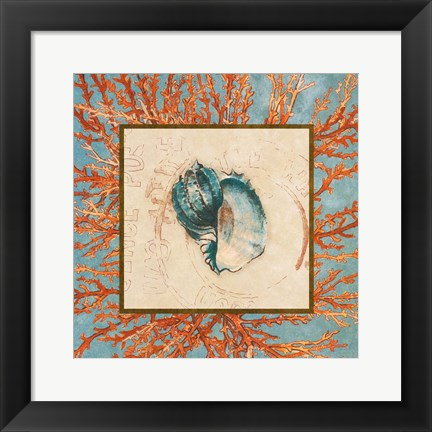 Framed Coral Medley Shell II Print
