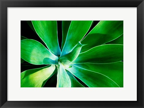 Framed Green Intrigue Print