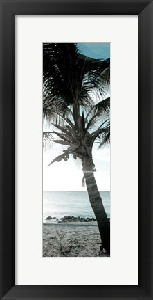Framed Cool Bimini Palm I Print