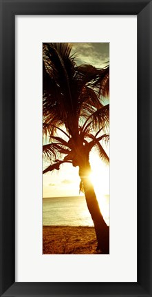 Framed Warm Bimini Palm Print