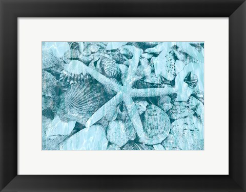 Framed East Coast Shells II Print