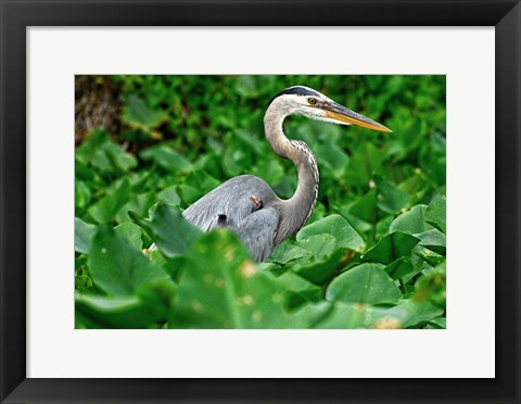 Framed On The Lookout Print
