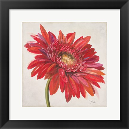 Framed Red Gerber Daisy Print
