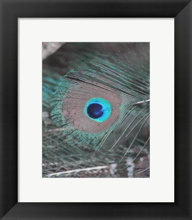 Framed Enchanted Feather I Print